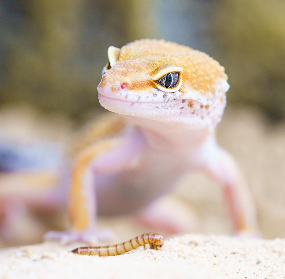 reptiles-ihover