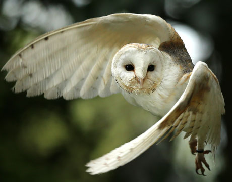 Quiet-as-an-Owl_hero