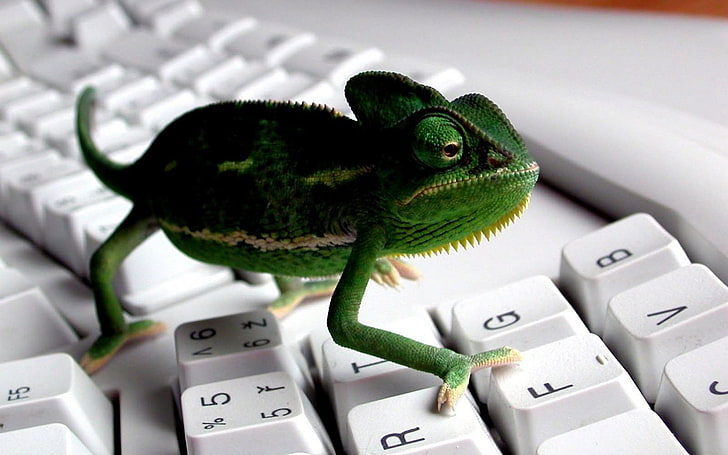 keyboards-animals-chameleons-wallpaper-preview