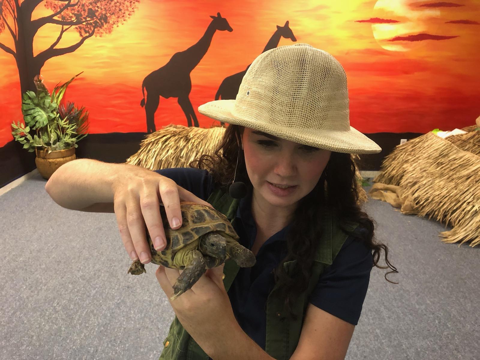JJ turtle africa
