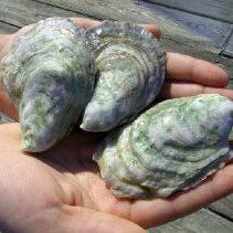 oysterhands-1-300x211